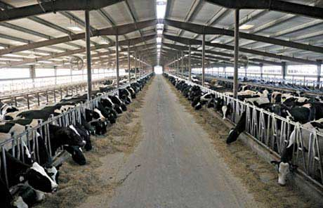 Israeli Companies Would Like To Get Involved In Dairy Farming India