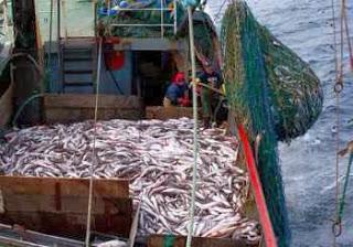 Les rapports sur la pêche pkr
